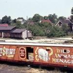 Wild Animal Menagerie