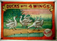 Fred Johnson Sideshow Banner Ducks With 4 Wings