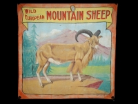 Fred Johnson Sideshow Banner Wild European Mountain Sheep