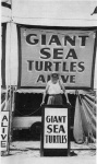 Al Tomaini's Giant Sea Turtle Show